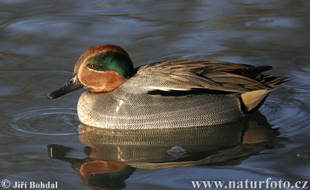 Commonteal